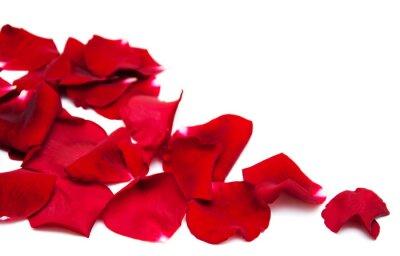 Bild Rote Rosenblütenblätter