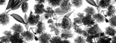 Bild sakura flowers - black and white