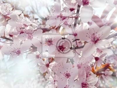Bild Sakura und Sonnenlicht