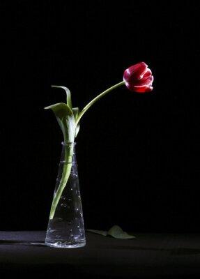 Bild Samotny tulipan
