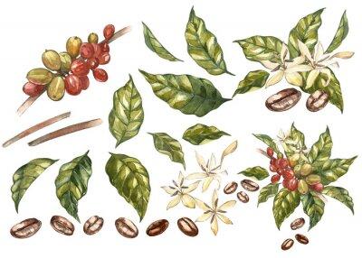 Bild Satz arabische Bohnen des roten Kaffees auf Niederlassung mit den Blumen lokalisiert, Aquarellillustration.