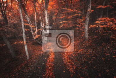 Scary autumn forest with trail in fog. Colorful landscape with beautiful enchanted trees with red leaves on the branches in fall. Amazing scene with mystical foggy forest. Spooky fairy wood. Nature