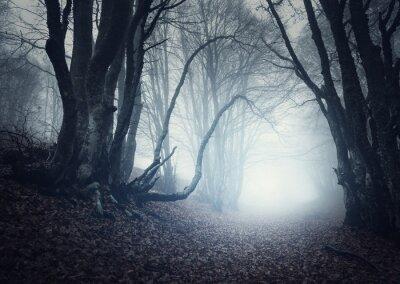 Scary geheimnisvollen Wald im Nebel im Herbst. Magische Bäume