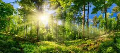 Bild Scenic forest of deciduous trees, with blue sky and the bright sun illuminating the vibrant green foliage, panoramic view