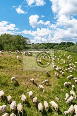 Schafe02