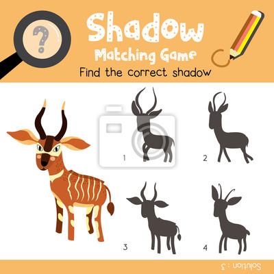 Schatten matching spiel von bongo tiere für vorschule kinder ...