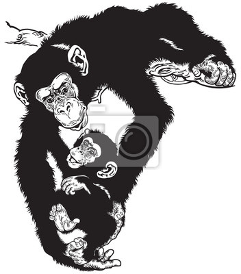 Schimpanse Mit Baby Schwarz Weiß Leinwandbilder Bilder Schimpansen