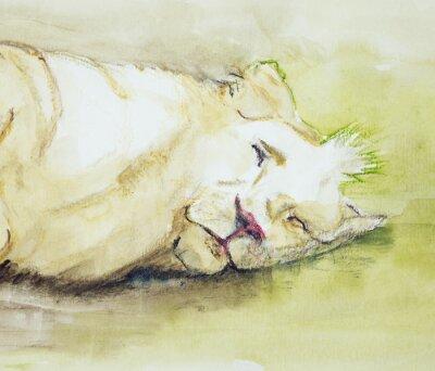 Bild Schlafender Löwe. Die dabbing-Technik in der Nähe der Kanten ergibt einen Weichfokus-Effekt aufgrund der veränderten Oberflächenrauhigkeit des Papiers.