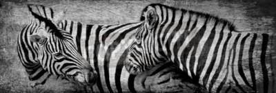 Bild Schließen Sie oben von den Zebras, die auf trockener Wiese weiden