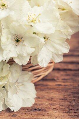 Bild Schließen Sie oben von der weißen blühenden Kirsche in einem Korb im Weinleseart
