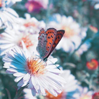 Bild Schmetterling auf der Blume