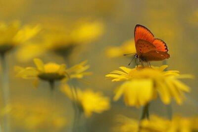 Bild Schmetterling im Garten