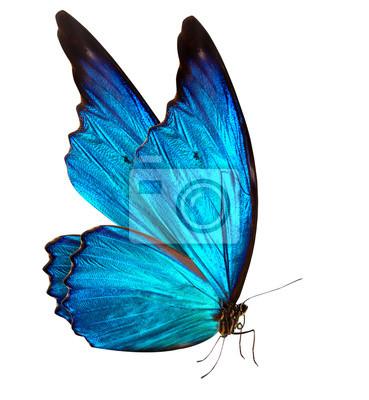 Bild Schmetterling Makro-Hintergrund