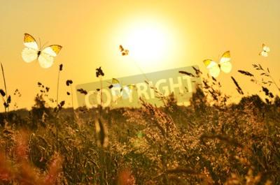 Bild Schmetterling und Sommer Wiese