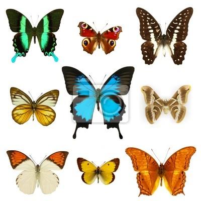 Bild Schmetterlinge Sammlung