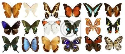 Bild Schmetterlinge Sammlung bunten isoliert auf weiß