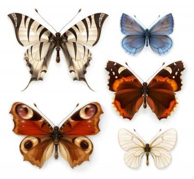 Bild Schmetterlinge, Vektor-Icons gesetzt