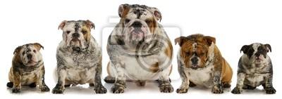 Bild schmutzige Hunde