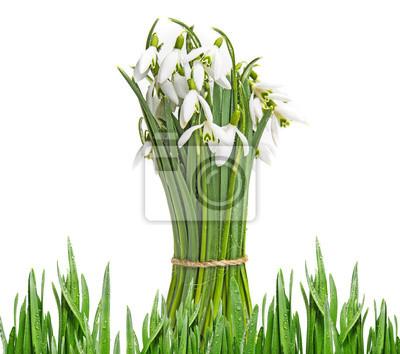 Bild Schneeglöckchen Blumen auf einem weißen Hintergrund