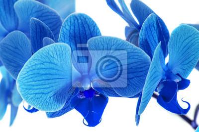Schöne Blaue Orchidee Ohne Hintergrund Helle Blaue Orchidee