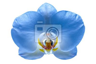 Schöne Blume Orchidee 6