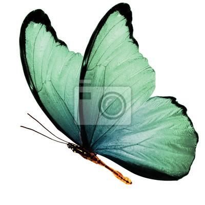 Bild schöne Flügel eines blauen Schmetterlinges getrennt auf einem weißen Hintergrund