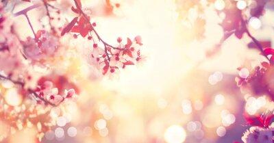 Bild Schöne Frühjahr Natur-Szene mit rosa blühenden Baum