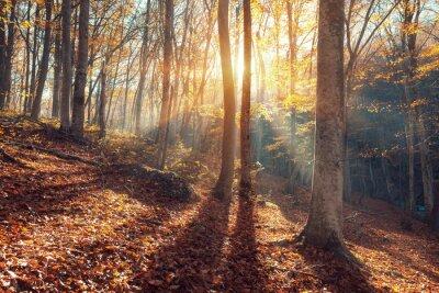 Schöne Herbst Wald in Krim Berge bei Sonnenuntergang. Natur