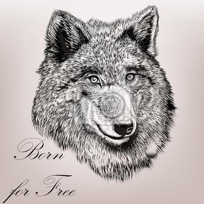 Schone Hohe Detaillierte Hand Zeichnen Wolf Realistischen Vektor