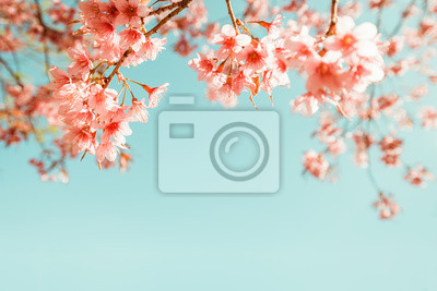Bild Schöne Jahrgang Sakura Blume (Kirschblüte) im Frühjahr. Jahrgang Farbton