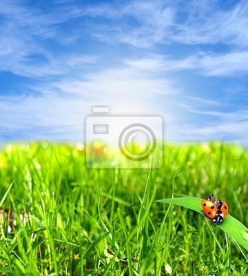 Bild Schöne Landschaft