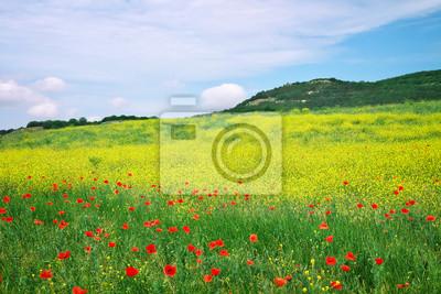 Schöne Landschaft Mit Blumen Frühling Blumenwiese Leinwandbilder