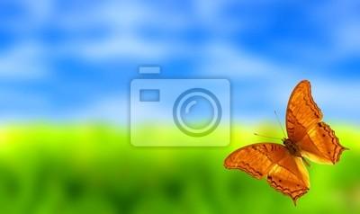 Bild Schöne Landschaft mit bunten Schmetterling
