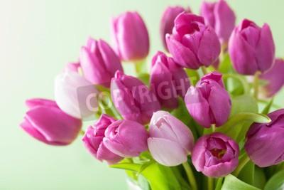 Bild Schöne lila Tulpe Blumen Hintergrund