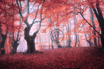 Schöne magische roten Wald im Nebel im Herbst. Märchenlandschaft