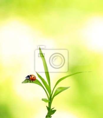 Bild Schöne Marienkäfer auf grünem Gras