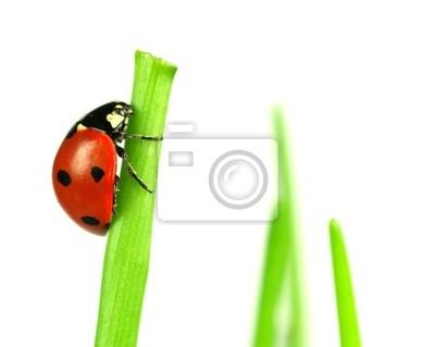 Bild Schöne Marienkäfer auf grünen Blättern