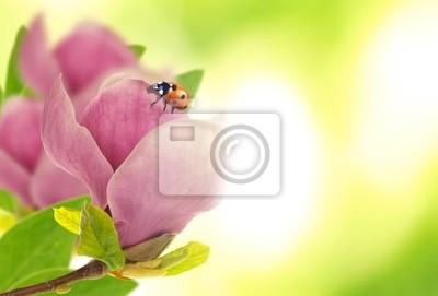 Bild Schöne Marienkäfer auf magnolia