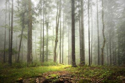 Schöne nebligen Wald Landschaft mit Niederschlag.