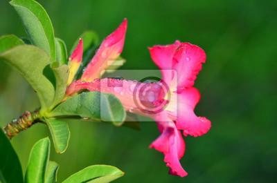 Rosa Vagina Bild