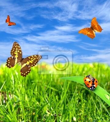 Bild Schöne Schmetterlinge und Marienkäfer auf Wiese