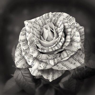 Bild Schöne schwarze und weiße Rose mit Anmerkung über die Blumenblätter