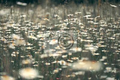 Schöne sonnige Landschaft Wiese mit verschwommen blühenden Gänseblümchen Blumen. Vintage Filter-Effekt und selektiven Fokus verwendet.