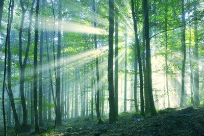 Schöne sonnige Morgen Wald