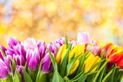 Bild Schöne Tulpe Blumen