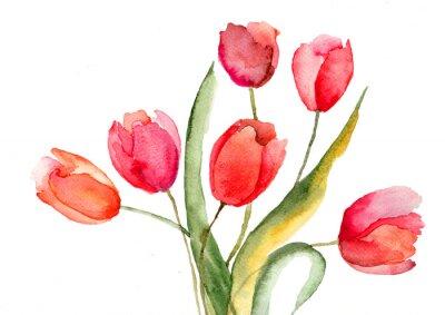 Schöne Tulpen Blumen