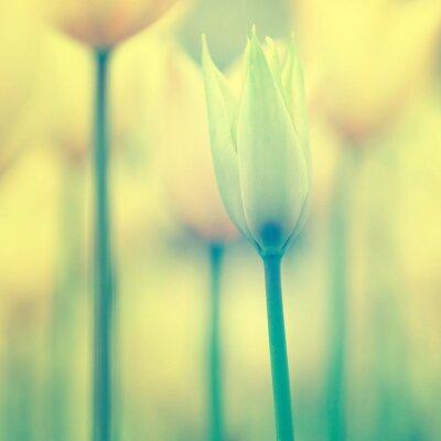 Schöne Tulpen Hintergrund