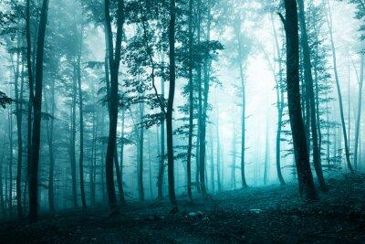 Schöne türkisblauen Wald
