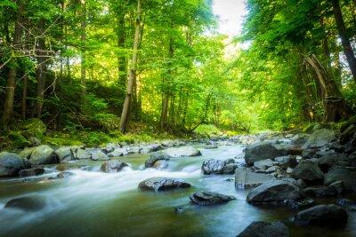Bild Schöne verträumte Bergbach im Wald