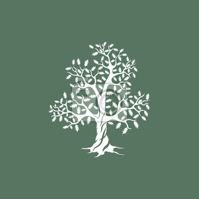 GroB Bild Schöne Weiße Eiche Silhouette Auf Grünem Hintergrund. Moderne  Vektor Zeichen. Premium